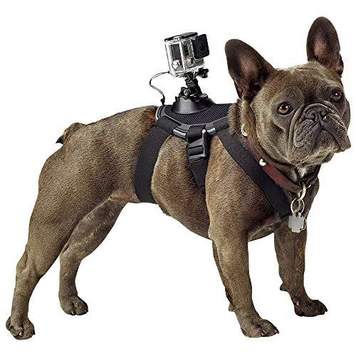 GoPro Fetch - Arnés de cámara GoPro para Mascota, Color Negro
